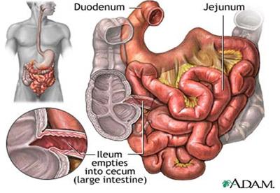 Dạ dày và tiêu hóa trước ruột non