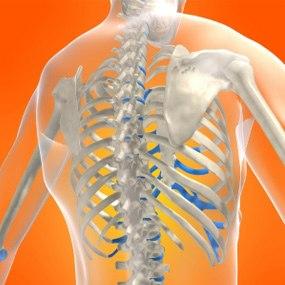 Hoóc môn Therapy sẽ làm giảm việc mất các tế bào xương và tăng độ đậm đặc cho xương