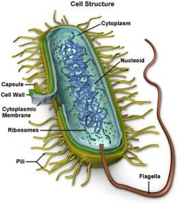 vi-khuan-mycoplasma