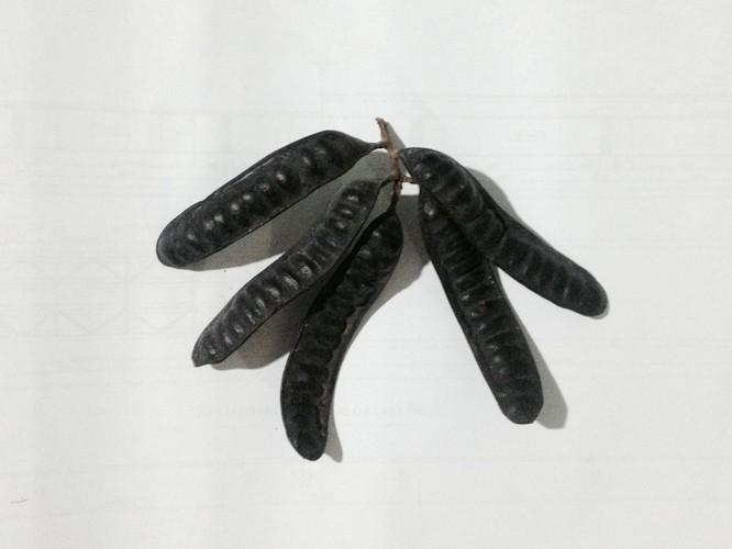 rau-cu-chua-benh-tri-1