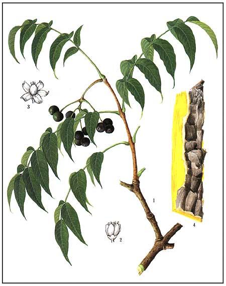 khang-sinh-thuc-vat