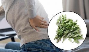 Cách chữa đau lưng bằng ngải cứu được nhiều người áp dụng