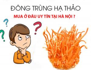 Mua đông trùng hạ thảo ở đâu đảm bảo uy tín và chất lượng tại Hà Nội
