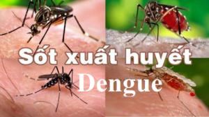 Virus gây bệnh sốt xuất huyết Dengue tồn tại ở 4 chủng khác nhau